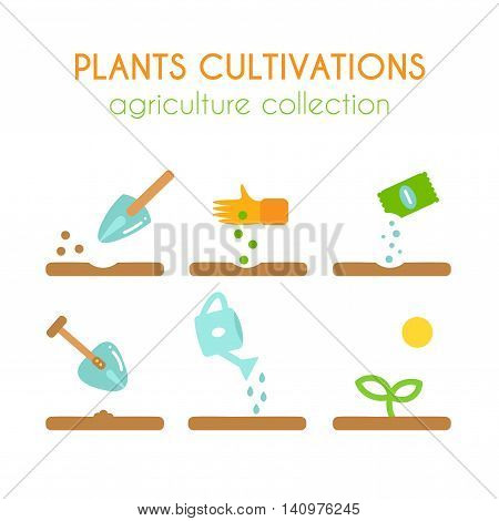 Vector plant cultivation. Growing plant illustration. Sowing and planting process infographic design. Flat argiculture collection.