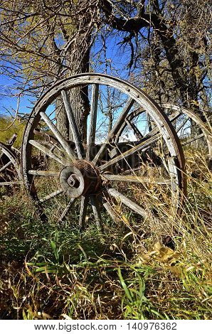 An old wagon with wooden wheels, spokes, and hubs is located in the long grass of an autumn colored woods.