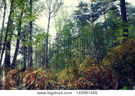 Autumn in a wild forest. Nature trees in morning sunshine.