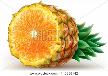 Composition fruits of pineapple with orange. Vector illustration