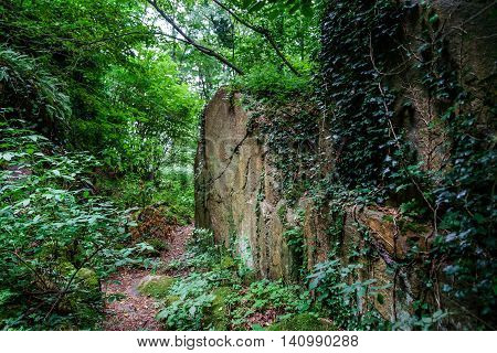 Deep Wild Forest With Stones In Alsace