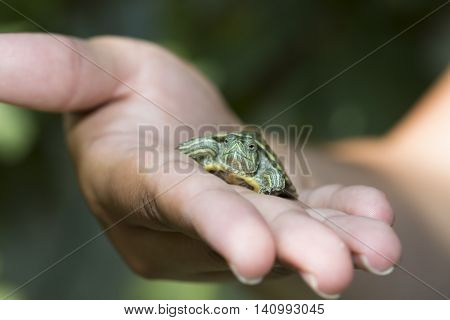 Nature Concept. Woman's hand holds red ear tortoise with blurry green background.