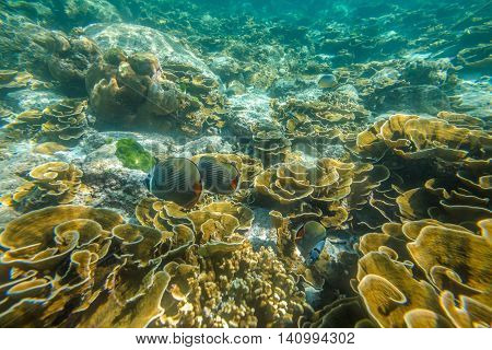Typical landscape seabed of Phuket, Racha Noi in Thailand.