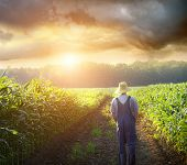 stock photo of ethanol  - Farmer walking in corn fields with beautiful sunset - JPG