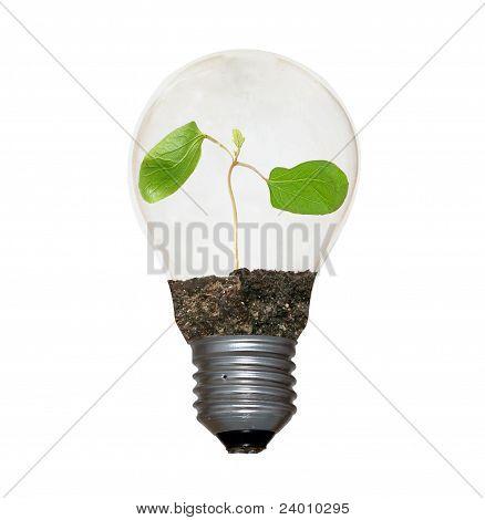 Sapling In Lamp