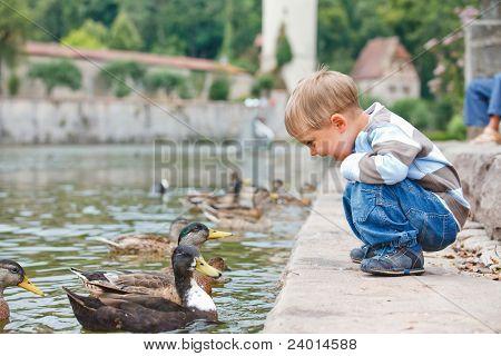 Lindo niño alimentación patos
