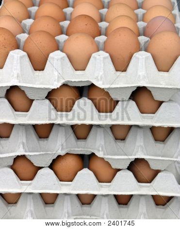 Trays Of Fresh Eggs