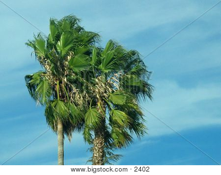 Windypalms