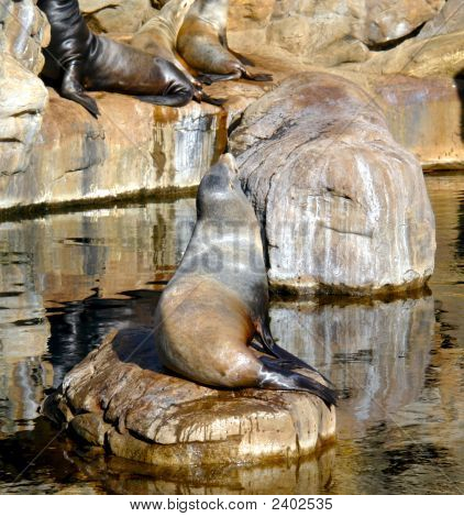 Sun Bathing Seals