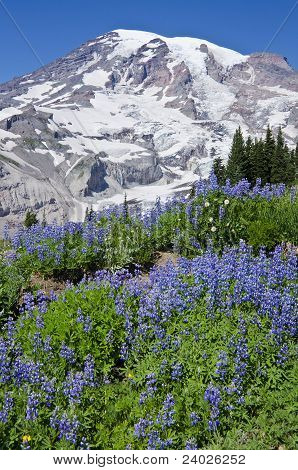 Mount Rainier and Its Summer Meadows