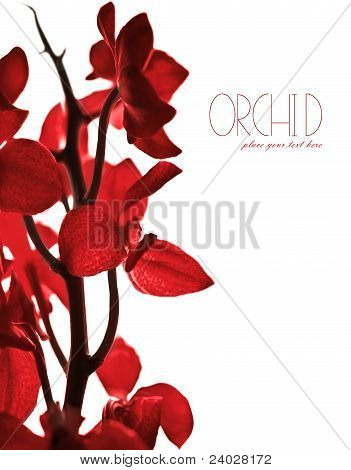 Red Orchid Border