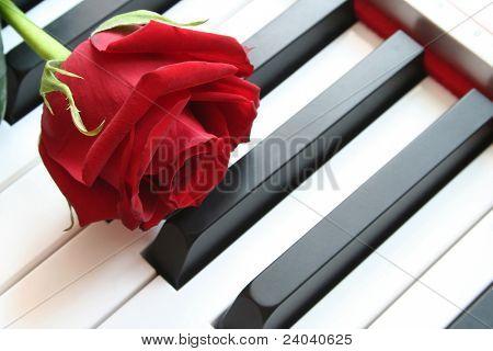 Beautiful rose on key pianoforte