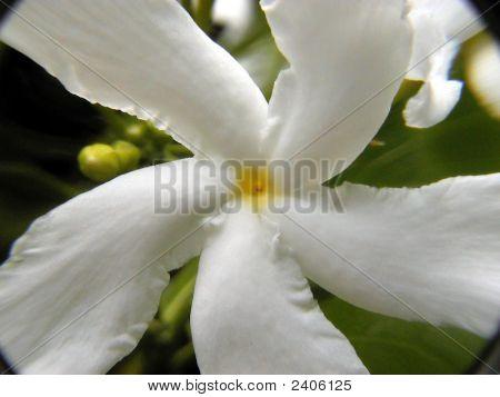 White & Yellow Flower Taken Close Up