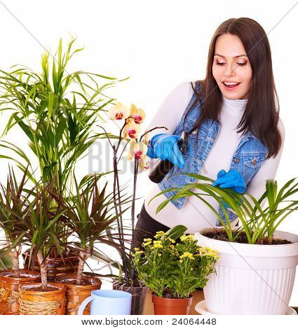 Woman  looking after houseplant at home.