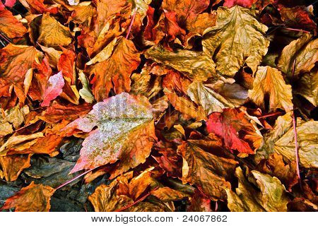 Autumn Leaf Salad