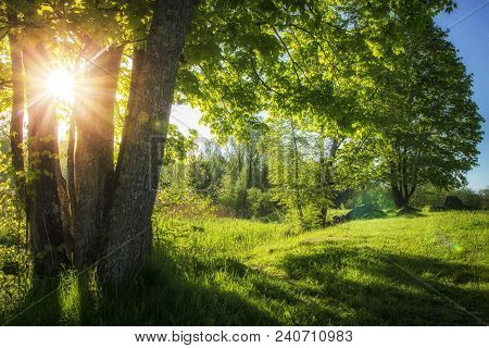 poster of Summer Landscape Of Green Nature With Bright Sun And Clear Blue Sky In Morning. Countryside View On