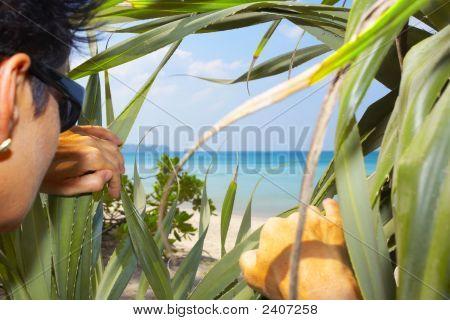 Descubrir tropical