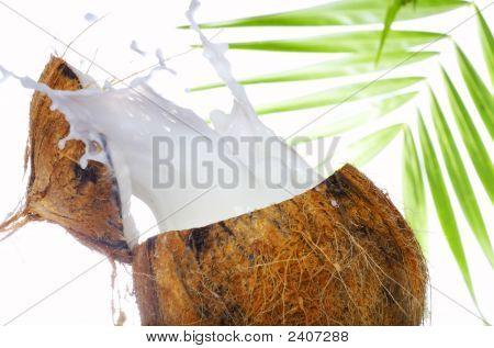Coconut Wave