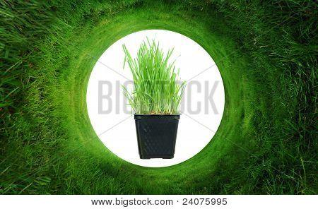 Fondo abstracto de la hierba