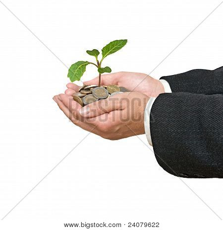 Cabbage Seedling In Hand