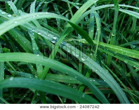 background of green grass with dew, photography, macro