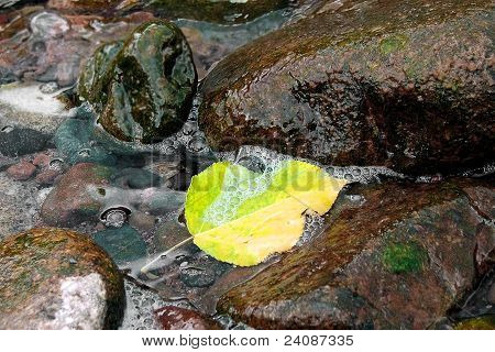 Autumn leaf in the water between the rock