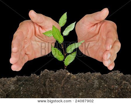 Hands protecting sapling on black background
