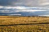 Grass Field In Reykjavik, Iceland. Autumn Landscape On Cloudy Grey Sky. Weather And Climate. Autumn  poster