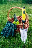 Small Hand Garden Trowel, Pruner And Black Gloves With Wicker Basket In Green Grass. Garden Tools An poster