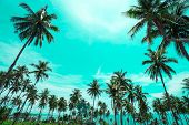 Palm Trees Vintage Toned , Fashion, Travel, Summer, Vacation And Tropical Beach . Creative Made Of G poster