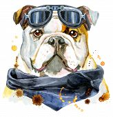 Cute Dog. Dog T-shirt Graphics. Watercolor Dog Illustration With Biker Sunglasses poster