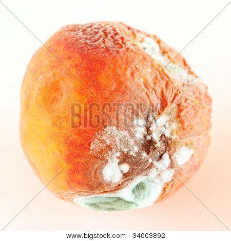mold on peach