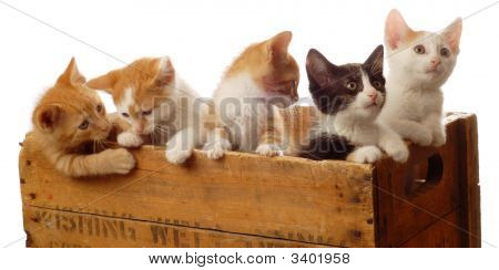 Five Kittens In A Box