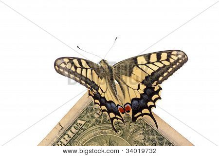 Butterfly On One Dollar