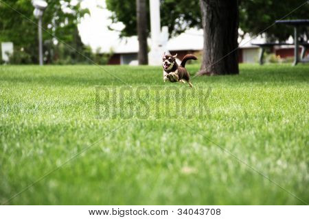Puppy running in park