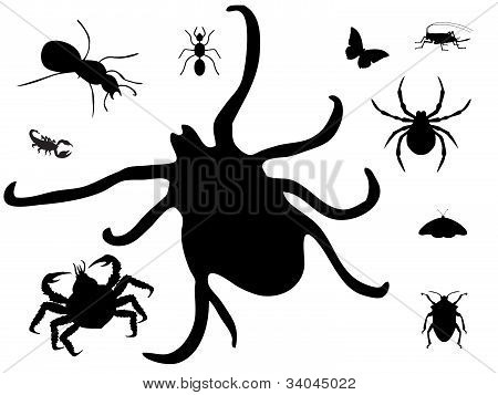 Bugs silhouette on white
