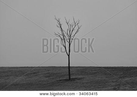 LONE LITTLE TREE