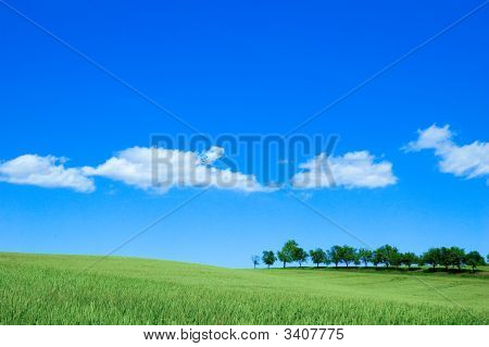 Green Farm Field Near Forest