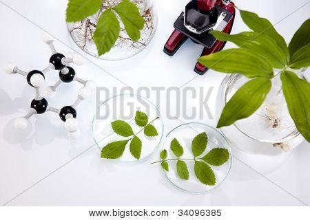 Chemistry equipment, plants laboratory glassware