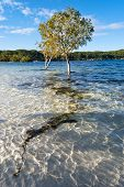 stock photo of mckenzie  - Lake McKenzie landscape in Fraser Island, Australia