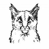 Caracal Baby Tabby, Wild Cat T-shirt Print, Isolated Monochrome Design, Hand Drawn Illustration. Wil poster