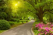 foto of grass area  - Summer park road - JPG