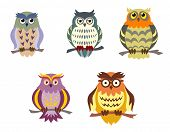 picture of owls  - Color cartoon owls set in doodle style for funny design - JPG