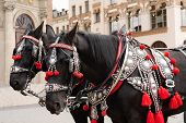 Horses In A Beautiful Holiday Ammunition On The Main Square Of Historical City. Traditional Carriage poster
