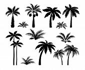 Silhouette Palm Trees. Set Tropical Black Jungle Plants Illustration. Vector Isolated Image Silhouet poster