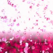 foto of cherry blossom  - artwork of cherry blossom petals swirling in the breeze - JPG