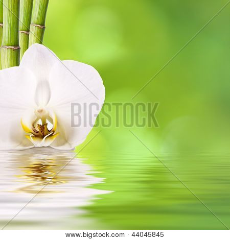 spa concept with nice green background and flowers