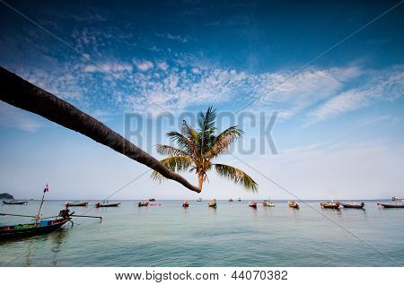 Palm And Boats On Tropical Beach, Thailand