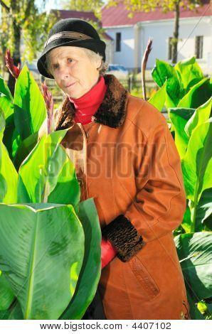 Old Woman Between Leaves