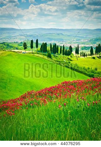 Flower Hill And Cypresses
